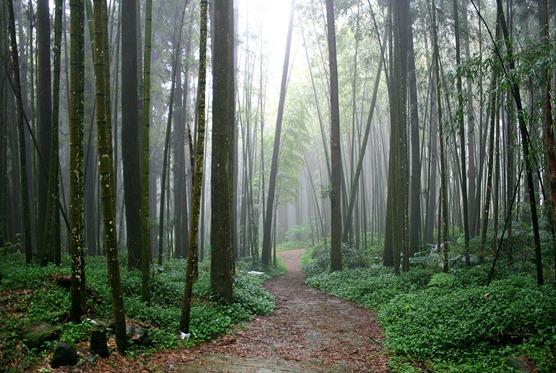 murkyforest3